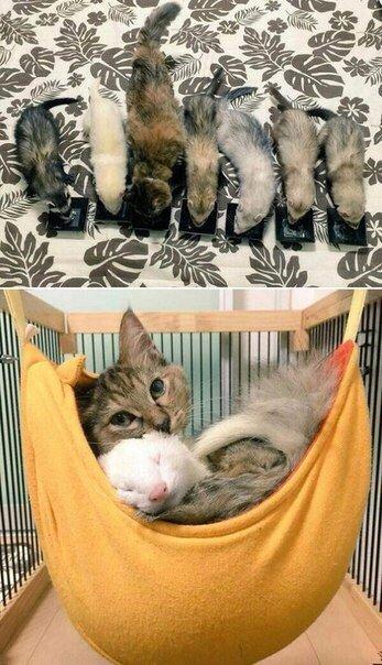 1YpL7v0J1BM - Кот, выросший в семействе хорьков