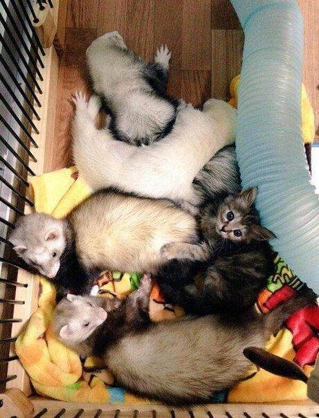KjeVO9QaTpw - Кот, выросший в семействе хорьков