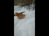 Кот и снег