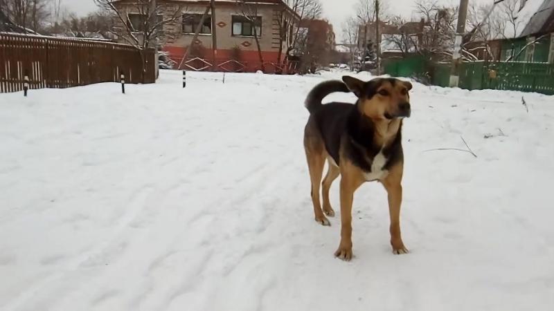 VID_20180121 - 21_115723 - 21 января 2018 г. Собаки в городе