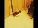 Поединок... teremlux cats cat Katze Katzen двакота котикииграют