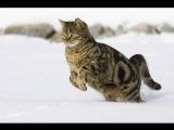 Вы когда-нибудь видели кота, так весело резвящегося в снегу!