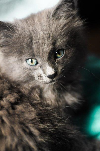 отдам котенка, блох нет! ест все, неприхотлив!#NMK_отдам #NMK_животны