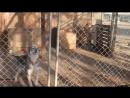 ТимВилль Поездка в приют для бездомных животных ТимВилль