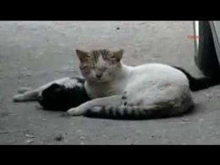 Самое грустное  видео про котов