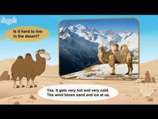 Meet the animals 35- camel - level 2 - by little fox