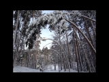 Живая арка на лыжне) Красиво.