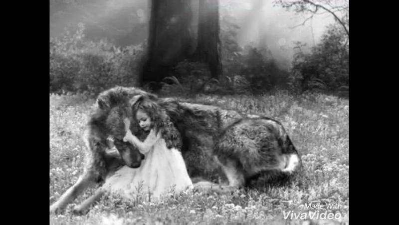 Рассказ про волка