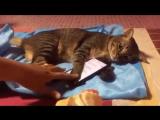 Не трогай мой телефон! Жду смс от Мурки!