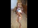 Осторожно злая собака со змеями!