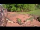 крокодил-каннибал