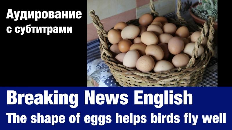 Breaking News English — The shape of eggs helps birds fly well   Суфлёр — аудирование по английскому языку