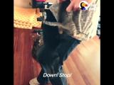 Нападение котов убийц