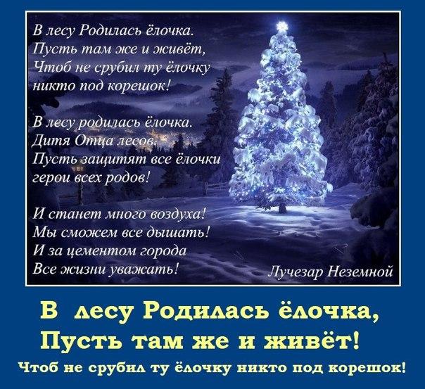 Не рубите на Новый год ёлки и вообще любые деревья!