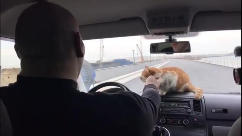 Валуев и кот Мостик Ход строительства Крымского моста проинспектировал депутат Николай Валуев. С собой он взял кота Мостика.
