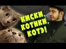 Таксист Русик Киски котики котэ