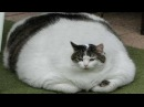 Приколы про кошек и людей самые смешные смешные котята 2
