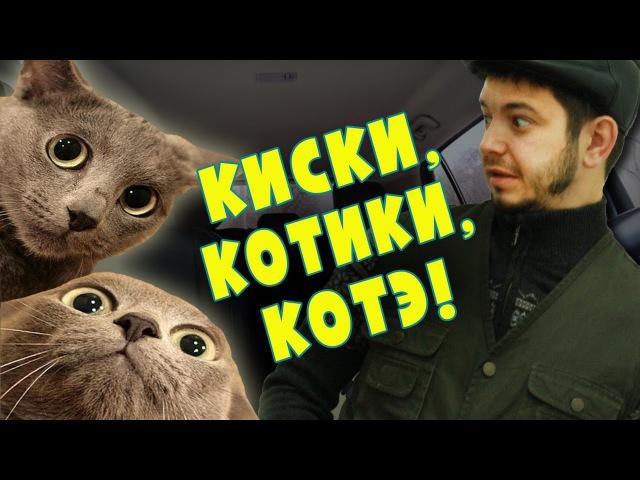 Таксист Русик. Киски, котики, котэ!