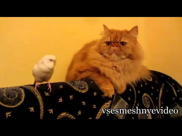 Смешные Кошки.киски.котэ ржач