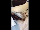 Бой кошки с собакой