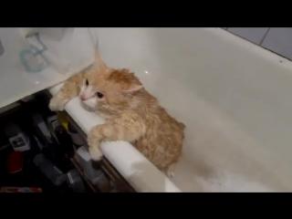 Кот Тима не может вылезти из ванной_ и смешно, и грешно