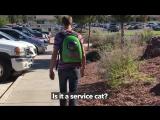 Рюкзак переноска для животных (2)