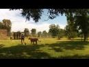 Animal Planet. Человек и львы Джабула заказник больших кошек / The Lion Man Jabula Big Cat Sanctuary / 2014 / 5