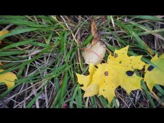 Осень в Башмаково (Sony ILCE Alpha A6000)
