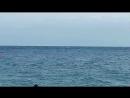 каждый день приплывают дельфины!