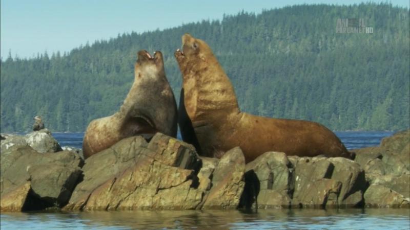 Неизведанные острова / Wildest Islands S02E03 Vancouver Island - Rivers of Life