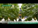 Тепличный комплекс в Степногорске планируют расширить до 6 гектаров