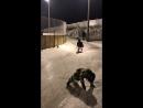 Маркушка на тренировки! Хоккей