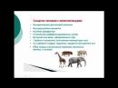 Биология 9 класс Место и особенности человека в системе органического мира Людмила Ивановна Profi