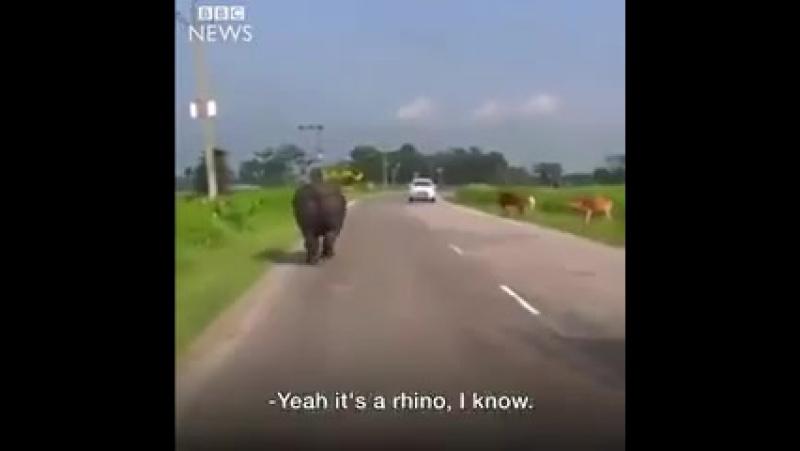 Осторожно! В Индии на дорогах бегают гигантские носороги:)