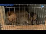Боровичский приют для животных