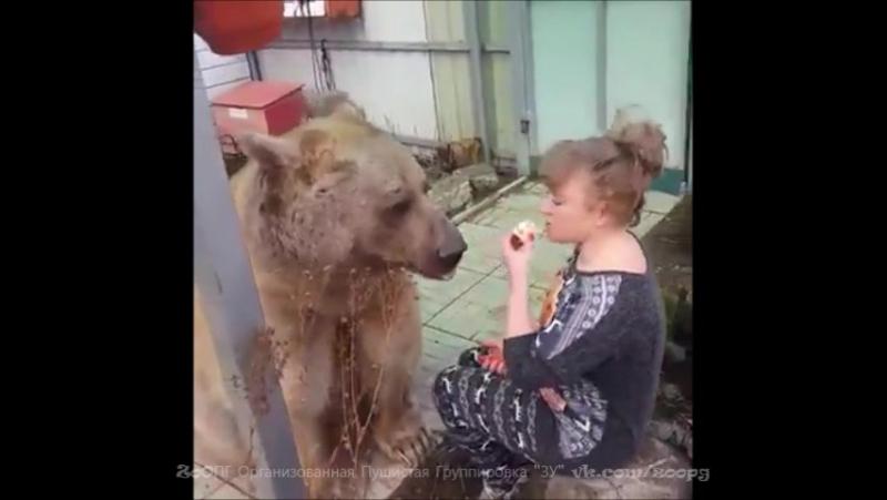 Инструкция для начинающих, как правильно настроить медведь перед уроком игры на балалайке...🐻🍏🎸