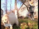 Догхантеры Новокузнецка, информация об отравлениях собак, как они выглядят. Подслушано Новокузнецк.