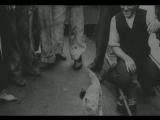 1917. Котик