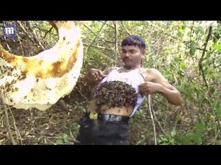 Индиец засунул себе под майку целый рой диких пчел
