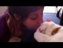 Кот мяукает когда его целуют