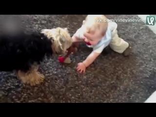 Собака - лучший друг ребёнка