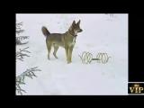 Самый прикольный клип с участием любимых героев!прикольные русские песни слушать!