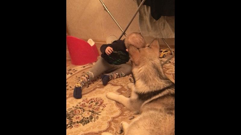 Маламутка Ася)5 мес и Никита 2,6 годиков