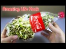Using a coca cola bottle to grow bean sprouts at home - Amazing life hack!
