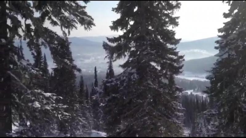 ШЕРЕГЕШ 2018 кедровый лес