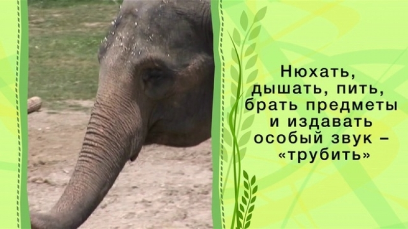 Зоопарк. Слон