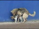 собака трахает кота