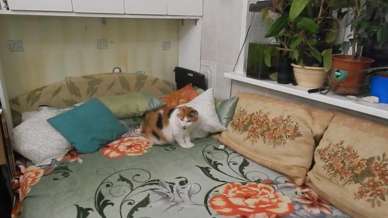 Кошка бузячая надиванная