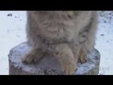 Настырный кот