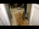 Магазин «Магнит» и кот Борис